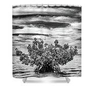 The Lone Mangrove Shower Curtain
