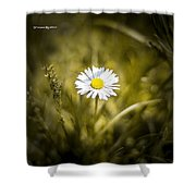 The Lonely Daisy Shower Curtain
