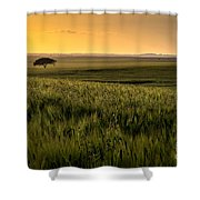 The Lonely Tree, Israel Landscape Shower Curtain