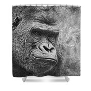 The Look Shower Curtain by Jeff Swanson