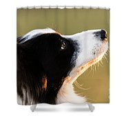 The Look Of A Dog Shower Curtain
