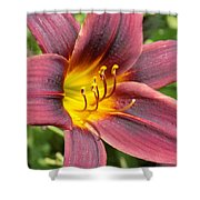 The Love Of Lilies Shower Curtain