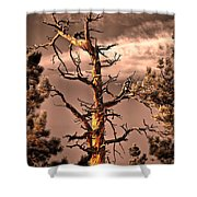 The Lurker II Shower Curtain