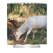 The Magical Deer 3 Shower Curtain