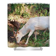 The Magical Deer Shower Curtain