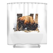 The Majestic Bison Shower Curtain