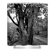The Maltreated One Shower Curtain