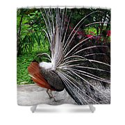 The Many Quills Of A Peacock Shower Curtain