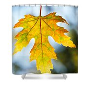 The Maple Leaf Shower Curtain