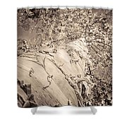 The Mighty Birch Tree  Shower Curtain