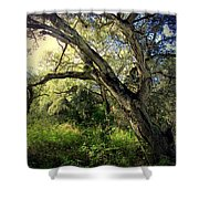 The Mighty Oaks Of Garland Ranch Park 1 Shower Curtain