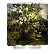 The Mighty Oaks Of Garland Ranch Park 2 Shower Curtain