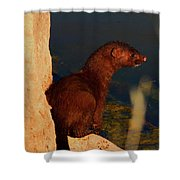 The Mink Shower Curtain