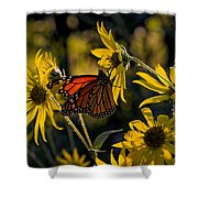 The Monarch And The Sunflower Shower Curtain
