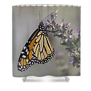 The Monarch Shower Curtain
