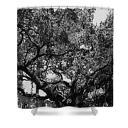 The Monastery Tree Shower Curtain