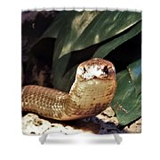 The Monocled Cobra Shower Curtain