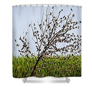 The More The Merrier- Tree Swallows  Shower Curtain