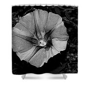 The Morning In Glory Shower Curtain