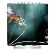 The Morning Story Shower Curtain