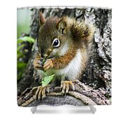 The Most Adorable Baby Squirrel Shower Curtain