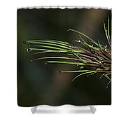 The Most Fabulous Spa..  Shower Curtain