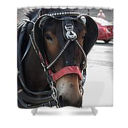 The Mule That Poses Shower Curtain