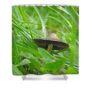 The Mushroom Shower Curtain