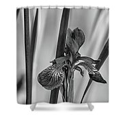 The Mystery Of Spring 2 Bw Shower Curtain