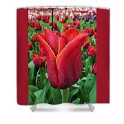 The Nederlands Tulip Festival 1 Shower Curtain