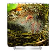 The Next Generation Hatched Shower Curtain