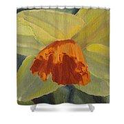 The Nodding Daffodil Shower Curtain