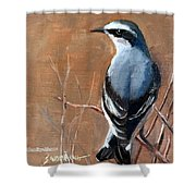 The Northern Wheatear  Shower Curtain