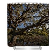 The Oak By The Side Of The Road Shower Curtain