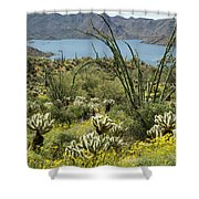 The Ocotillo View Shower Curtain