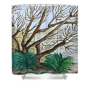 The Old Apricot Tree Shower Curtain