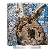 The Old Cherry Tree Shower Curtain