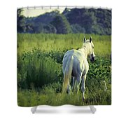 The Old Grey Mare Shower Curtain