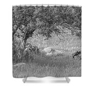 The Old Homestead 2016 Shower Curtain