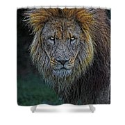 The Old Lion Shower Curtain