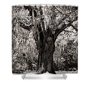 The Old Oak Is Still Standing Shower Curtain