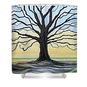 The Stained Old Oak Tree Shower Curtain