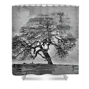 The Old Oak Tree Standing Alone  Shower Curtain