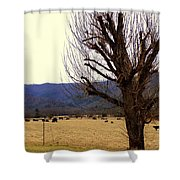 The Old Tree In Winter Shower Curtain