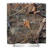 The Orange Iguana Shower Curtain
