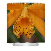 The Orange Orchid Shower Curtain
