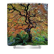 The Other Japanese Maple Tree In Autumn Shower Curtain
