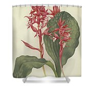 The Outstanding Stenorrhynchos  Shower Curtain