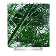The Palm House Kew England Shower Curtain