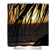 The Palm Tree In The Sunset Shower Curtain by Danielle Allard